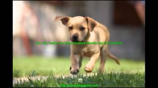Natural Remedy For Dog Ear Infections.mp4