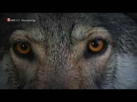 Jagdkumpane - Wie der Hund auf den Menschen kam