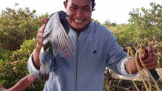 Slingshot hunting bird #101