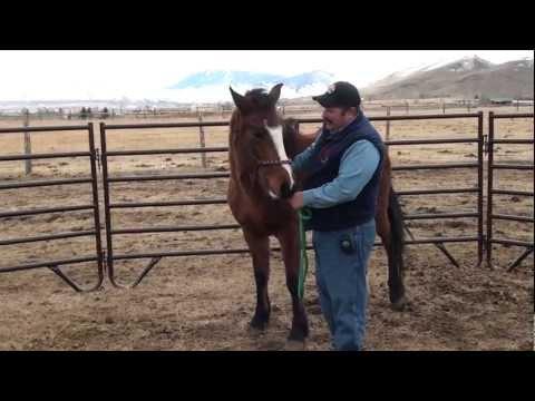 Challis Horse Gather 2012