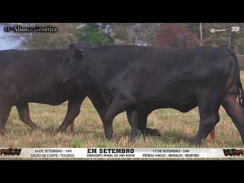LOTE 063