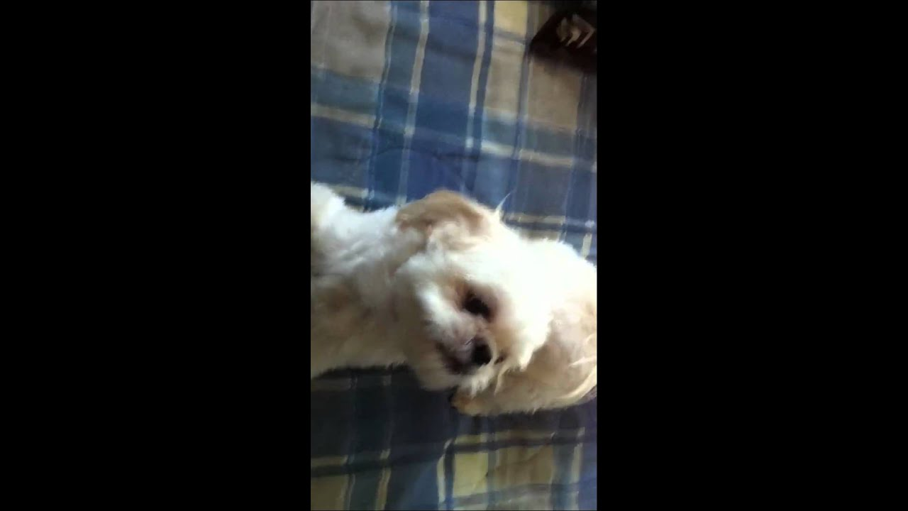 Crazy Animal Pictures: cute little puppies  |Crazy Little Puppies