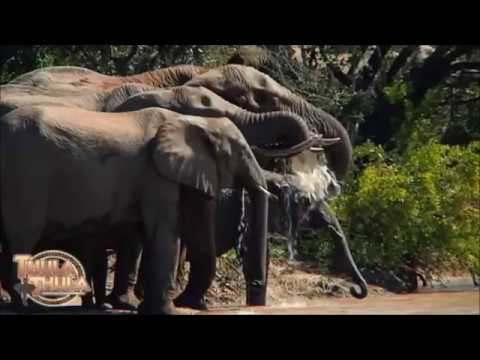 Thula Thula Private Nature Reserve - Zululand - Safari Destinations - Find your perfect get away