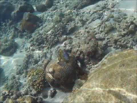 Marine life - Malaysia 2016