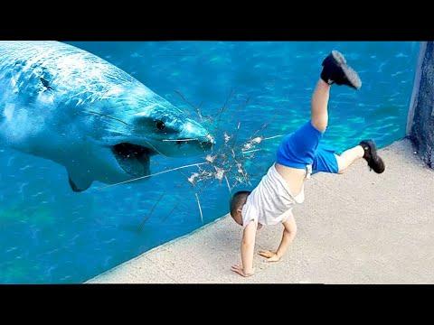 طفل القرش يذهب