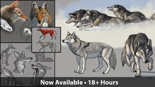 How to Draw Wolves, Coyotes & Foxes - Sneak Peek