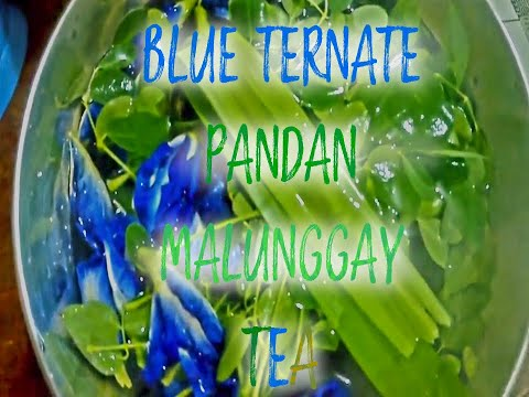Blue Ternate Tea  with Malunggay and Pandan Leaves