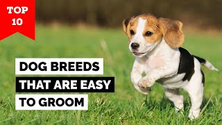 Top 10 Dog Breeds That Are Easy To Groom
