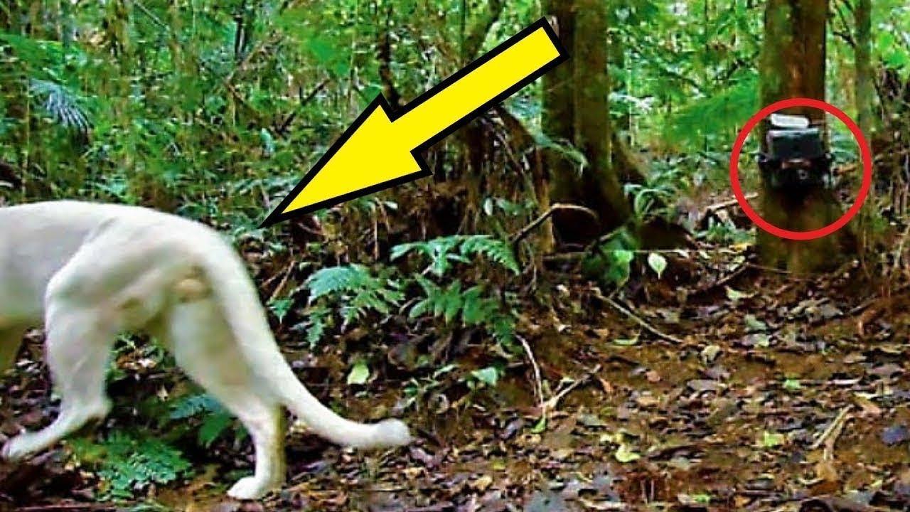 لا يزال العلماء في حالة ذهول , كاميرا صورت حيوان غريب وغير موجود في الطبيعة...  - نشر قبل 7 ساعة