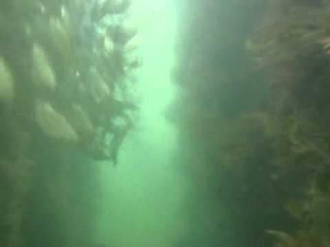 Under The Jetty At Seisia, Bamaga