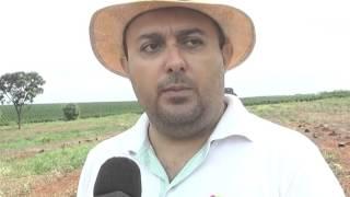 POMAR DO INSTITUTO FEDERAL DE BARRETOS (TV BARRETOS)