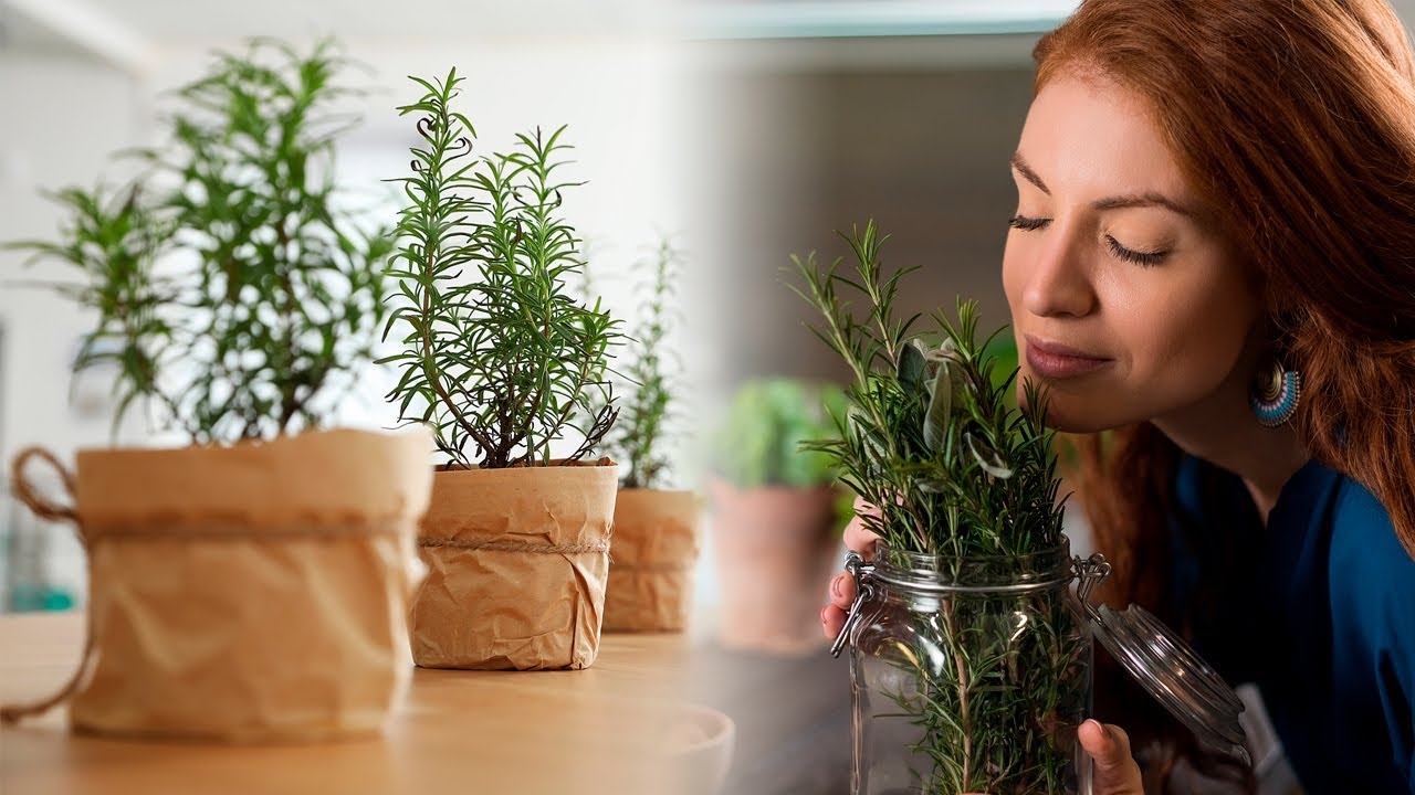2 Amazing Medicinal Plants You Can Grow at Home