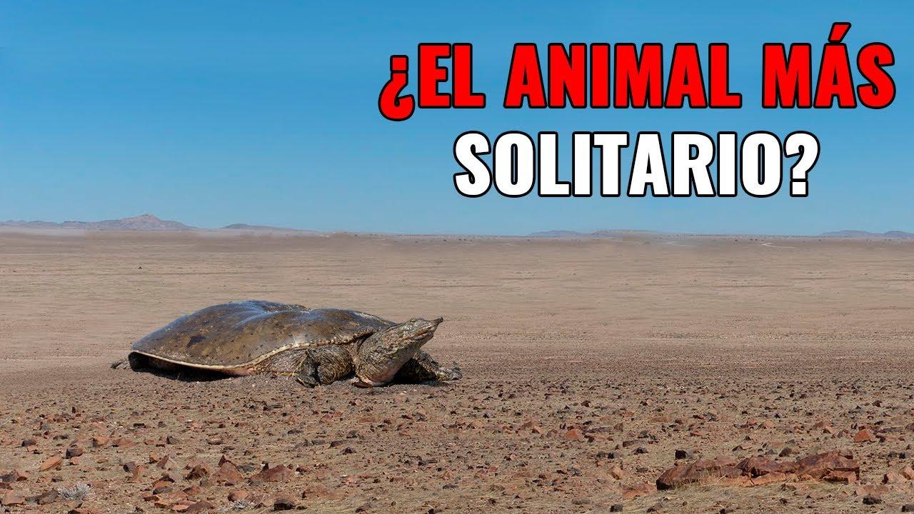 TOP 10 Animales más SOLITARIOS DEL MUNDO