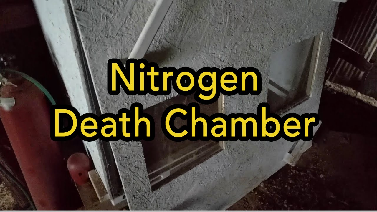 Image result for death by nitrogen gas