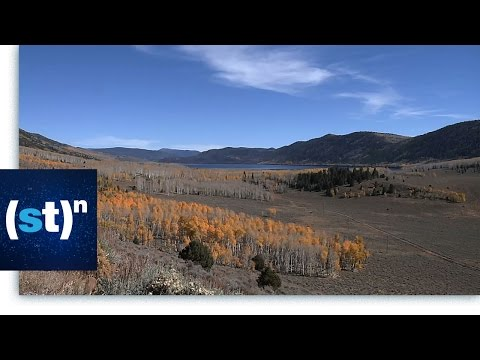 Pando, One of the Oldest and Largest Organisms   SciTech Now