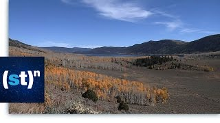 Pando, One of the Oldest and Largest Organisms | SciTech Now