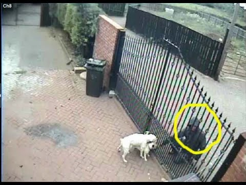 Dog Theft At The Stow Burglar Takes 1s Dog Too Fast