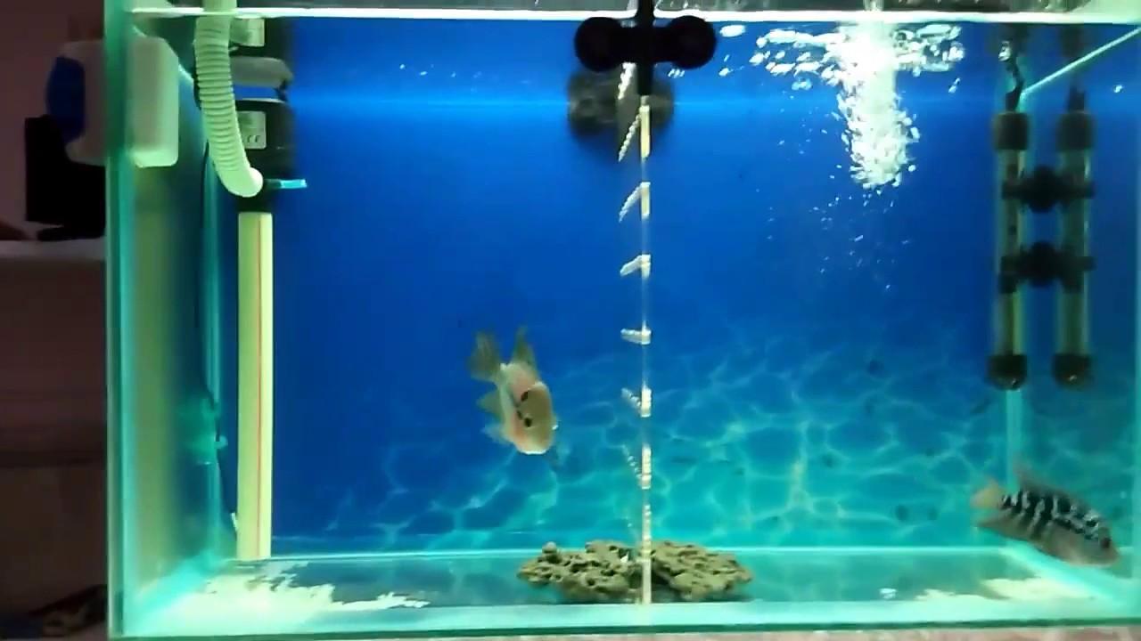 aquarium top filter setup youtube. Black Bedroom Furniture Sets. Home Design Ideas