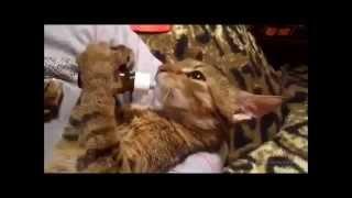 Кошки! Улыбнись)) приколы часть #1