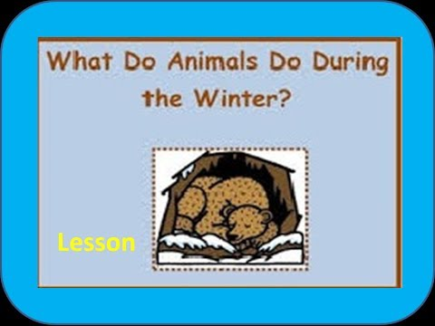 ... Animals -for Kids of Kindergarten,Preschoolers,Toddlers - YouTube