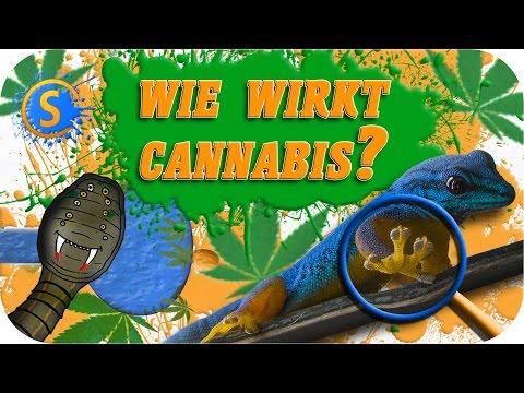 Wie wirkt Cannabis | Volkszählung durch Vampire | Der Gecko Kleber [NerdNews]