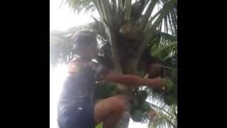 Video Video lucu memanjat pohon kelapa download MP3, 3GP, MP4, WEBM, AVI, FLV Desember 2017