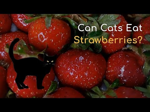 Can Cats Eat Strawberries   Is This Fruit Good for Your Cat