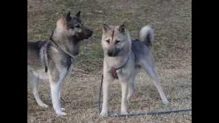 譲渡対象犬です、お問い合わせ先 jf2kol@yahoo.ca まで.