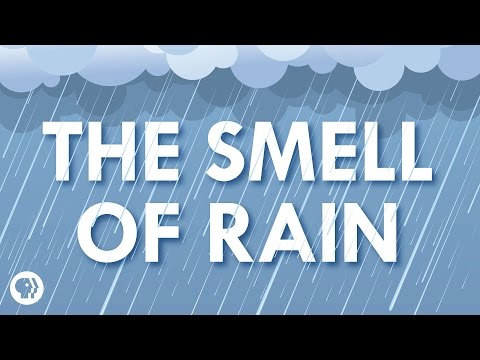 Video image: Where does the smell of rain come from?