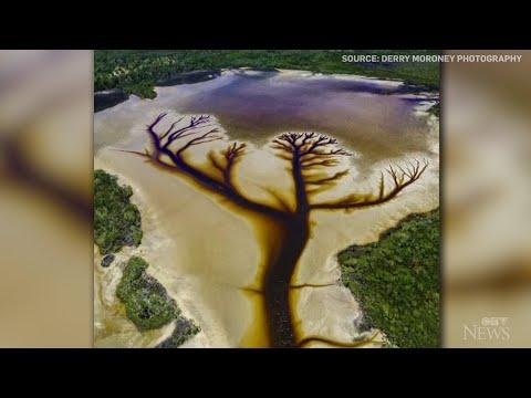 Caught on camera: Stunning tree shape found in Aussie lake