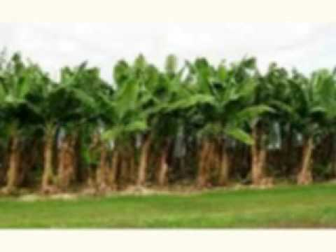 agricultural land use agriculture land for sale in india