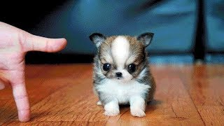Cutest Dogs and Cat video compilation -  Funny Cute Baby Videos