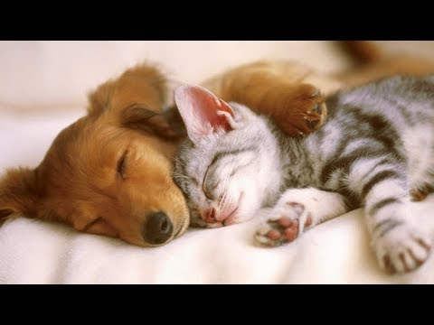These PETS and ANIMALS are MORE than FUNNY! -Funny PET and ANIMAL compilation