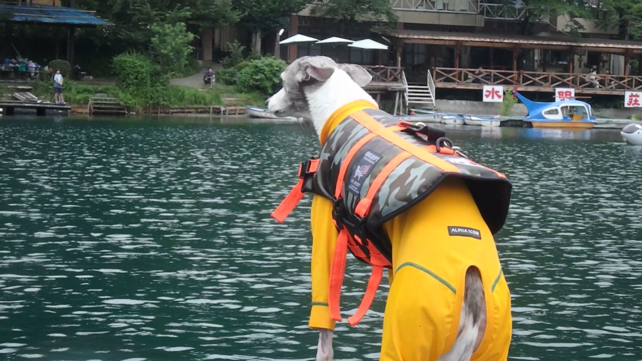 John Daro Toshi Dog Hoodie