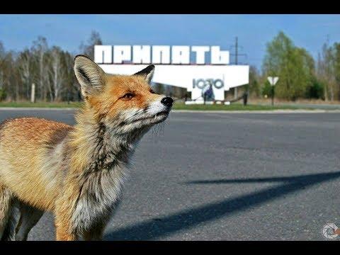 Экскурсия в Припять. #2...