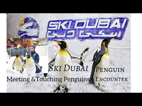 Ski Dubai & Penguin Encounter, Mall of Emirates