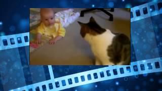 Котэ отжигает. Милые и смешные коты. Funny Cat Videos