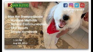 #sheepadoodle  #stopjumping  #noprong  Dog Training of @FortMyersK9 - Best Dog Trainer