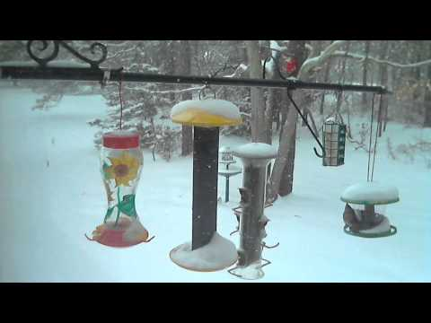 Female Northern Cardinal At Feeder In Snow Storm