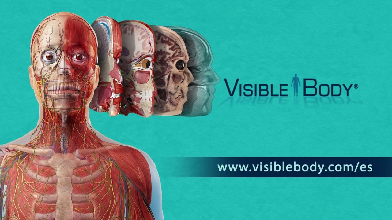 Visible Body | ¡Vea la increíble anatomía en 3D! - YouTube
