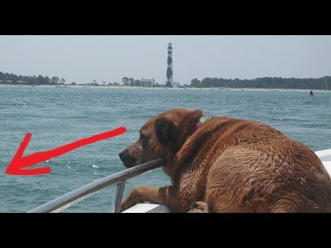 REAL MERMAID ATTACKS DOG CAUGHT ON TAPE