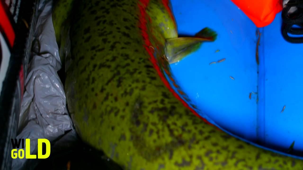 Рыбалка на гигантских угрей в Австралии