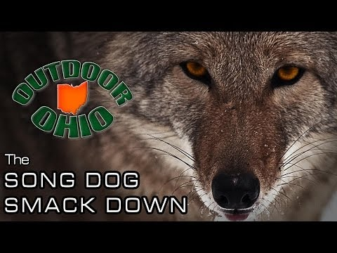 OutdoorOhio | The Song Dog Smack Down | An Ohio Coyote Hunting Drive!