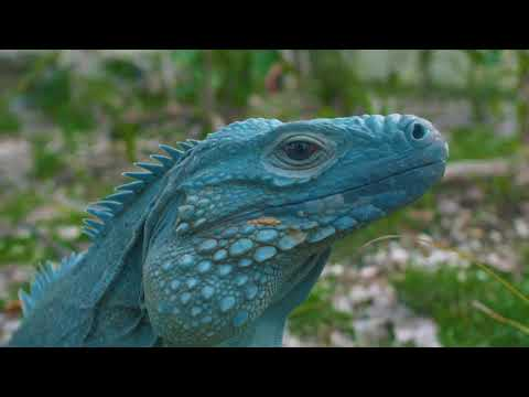 National Attractions of the Cayman Islands