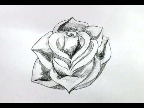 How to draw a rose flower step by step very easy method