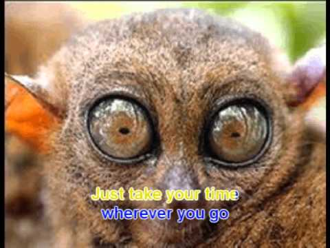 COLBIE CAILLAT BUBBLY KARAOKE - Feat. TARSIER MORPHING ANIMATION