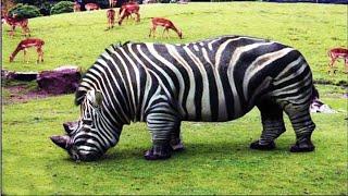 10 Bizarre Hybrid Animal That Actually Exist