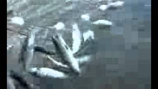 """Ловля Зимой На Течении-Снасти,Оснастка Видео """"Рыболов Элит"""" [Ловля Рыбы На Течении]."""