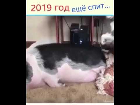 2019 год еще спит!