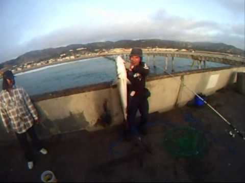 Monster white sea bass caught on the pacifica pier for Pacifica pier fishing report